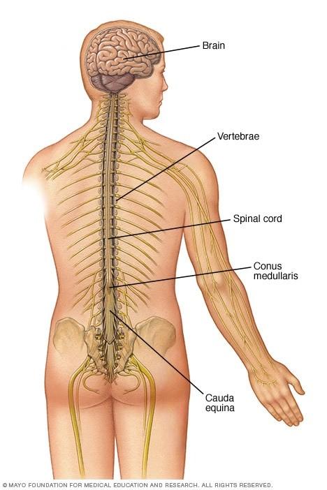 آسیب نخاعی چیست و چه علائم و علتهایی میتواند داشته باشد؟